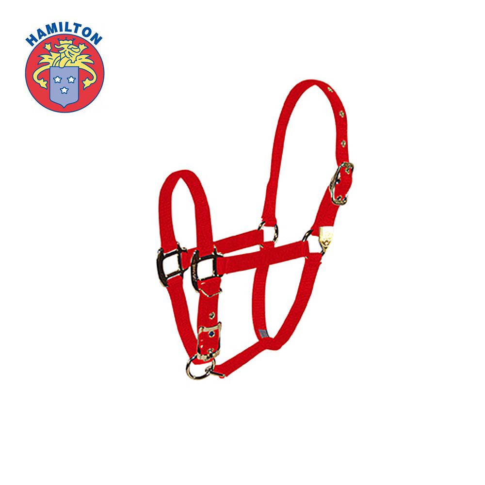 ai00021-Nylon-Deluxe-Arabian-Halter-Adjustable