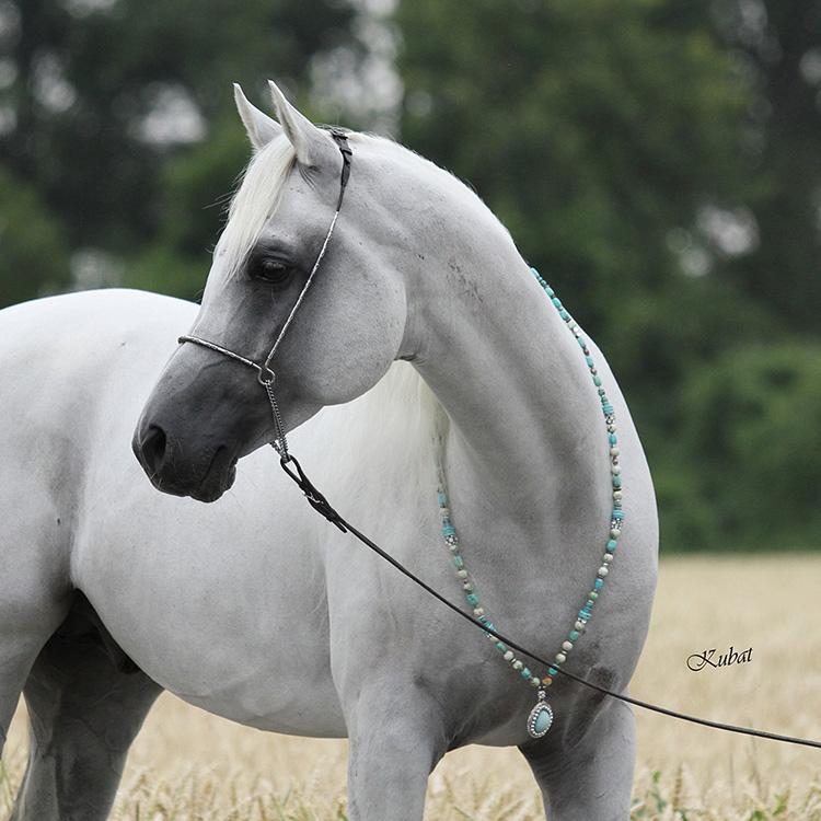 ai00238-Necklace_silver